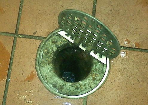 Dirty drains attract drain flies