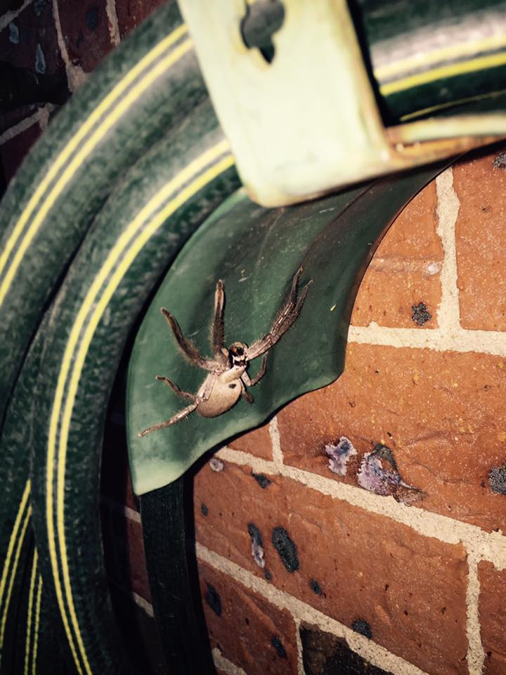 Residential Kr Pest Control