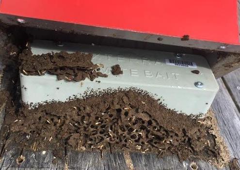Exterra termite bait box