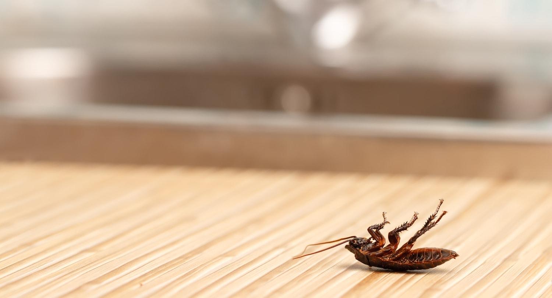 Eco-friendly pest control service