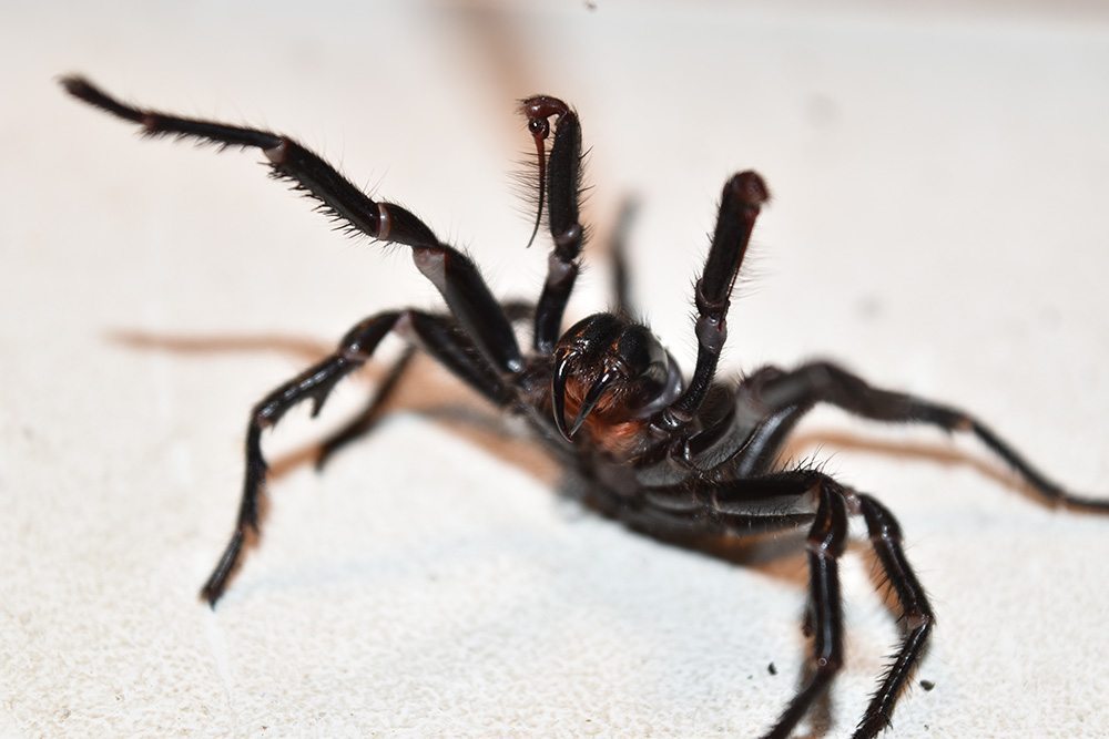 Spider pest control – Cute but deadly